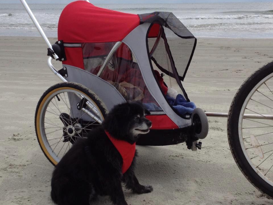 dog-beach.jpg#asset:1155